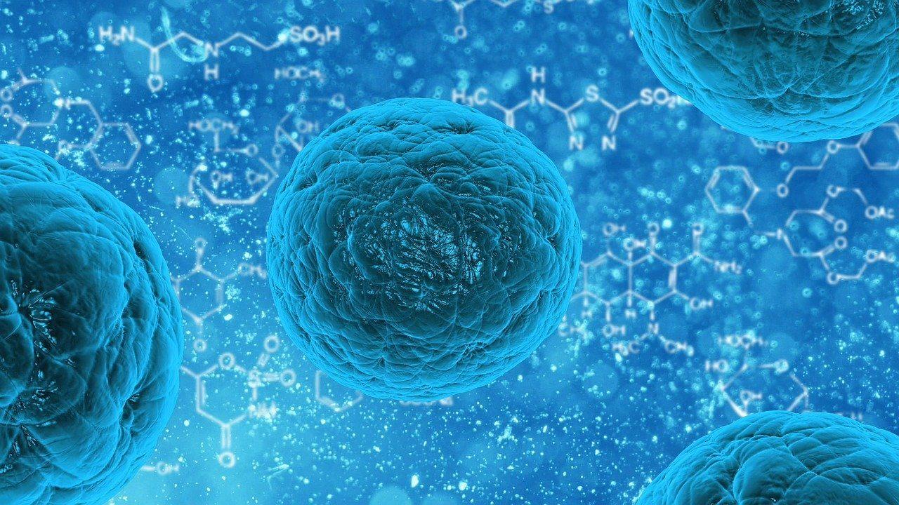 sistema inmunitario drogas