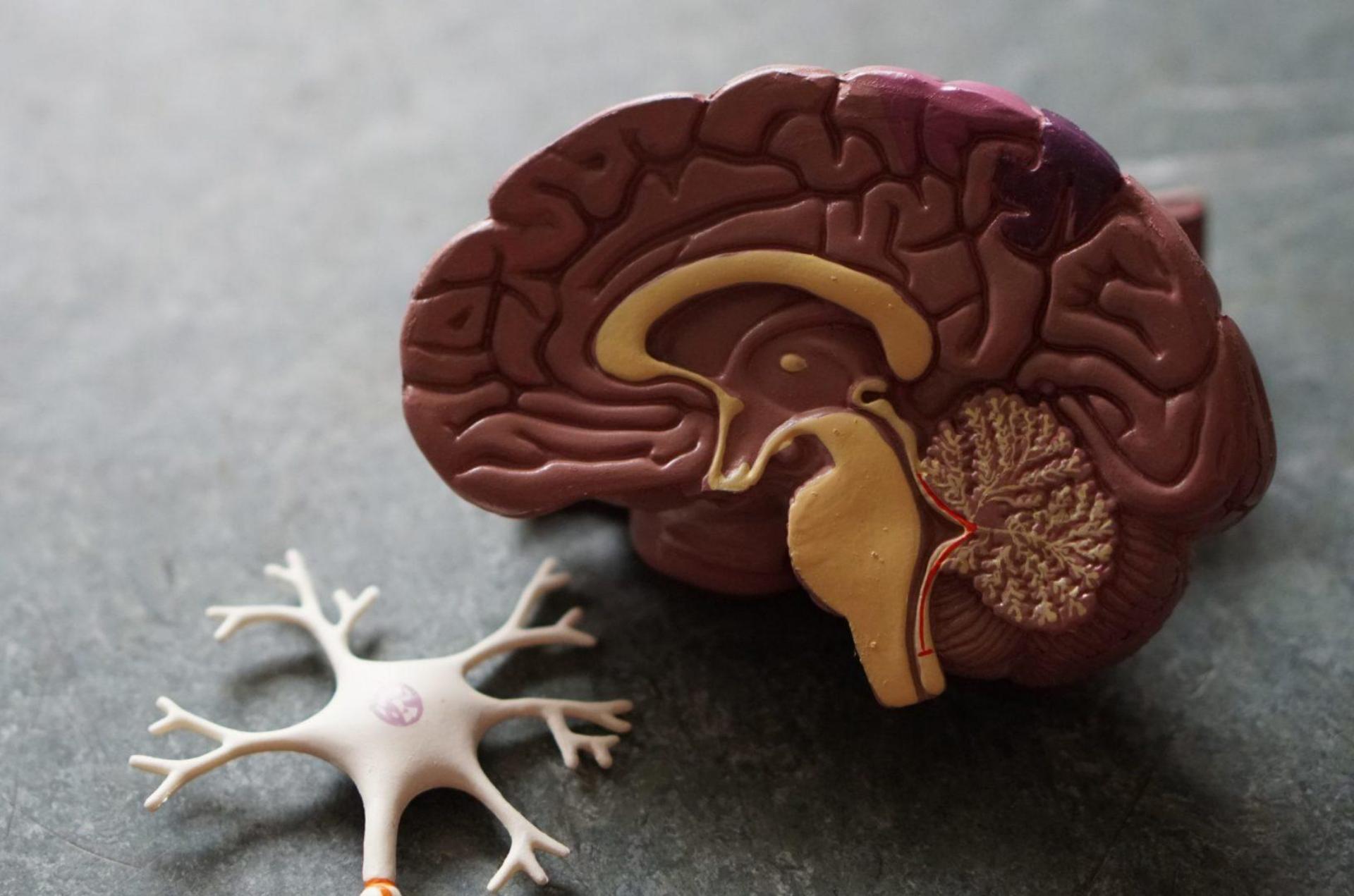 Las drogas perjudican el sistema nervioso